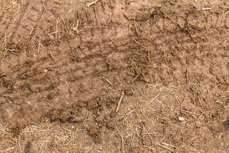 The trace of a tyre in the soil Stock Photo - 21015273