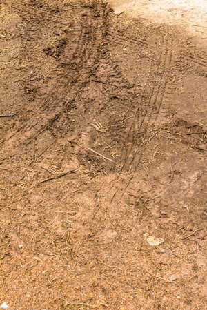 The trace of a tyre in the soil Stock Photo - 21015275