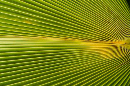 image of Green Palm leaves in nature Stock Photo - 21015286