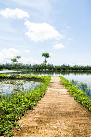 Pathway on lotus pond photo