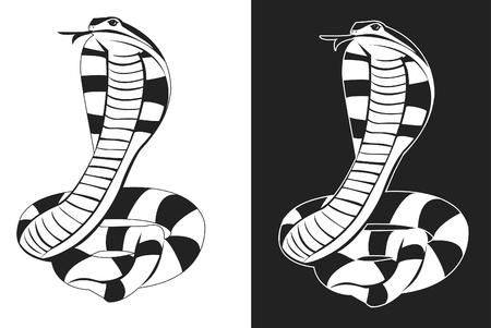 Snake tattoo Stock Vector - 22348982
