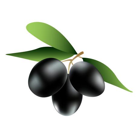 three black ripe olives on the branch