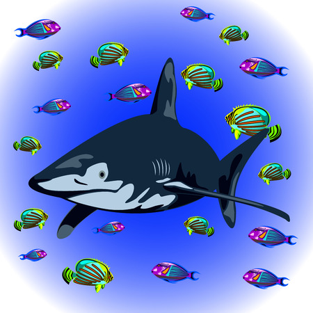exotic fish: aggressive shark and exotic fish ocean backdrop