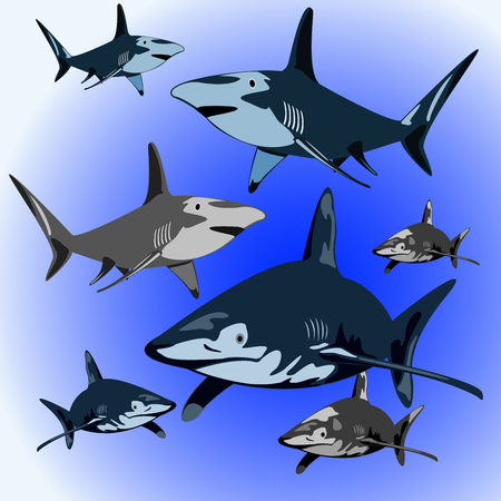 ocean background: a flock of aggressive sharks in the ocean background Illustration
