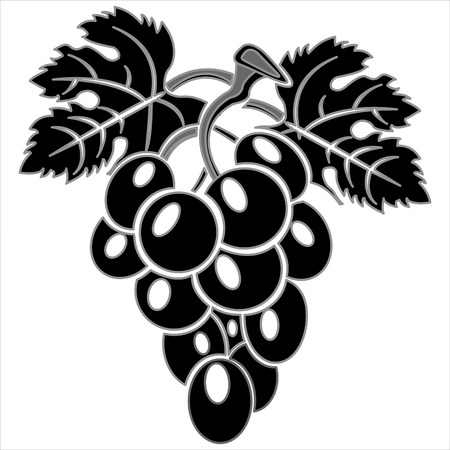 bunch of grapes with leaves on white background vector Illustration