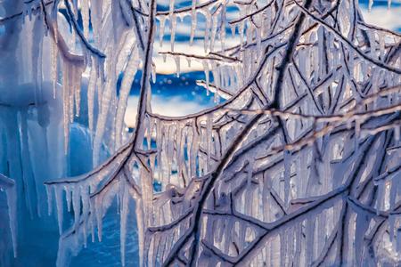 De nombreux glaçons suspendus sur les branches d'un arbre