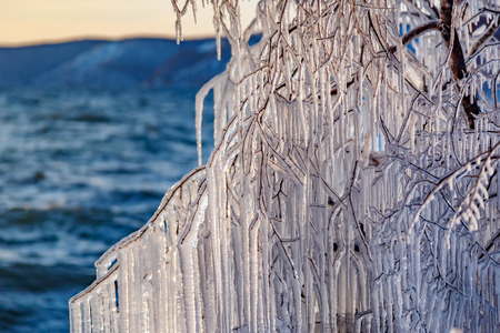 Icicles hanging on a tree branches at Baikal lake
