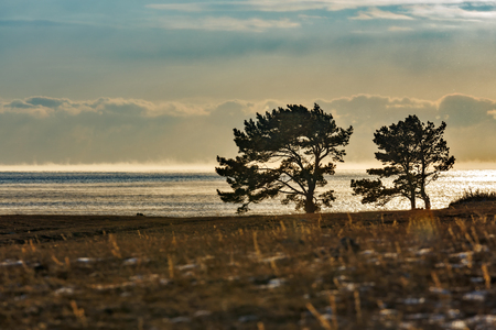 Pine trees at the shore of Baikal lake in winter