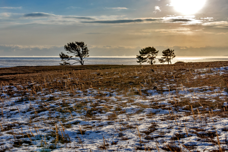 Shore of Baikal lake with pine trees in winter