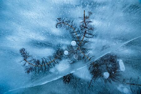 Water plant of lake Baikal frozen in ice with bubbles and cracks