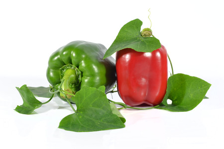 Red and green peppers on a white back ground.