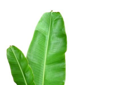 新鮮なバナナの葉を分離