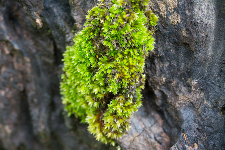 Moss up on a large rock.