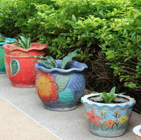 다채로운 냄비에 Houseplant 스톡 콘텐츠