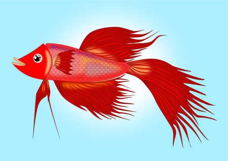 샴 싸우는 물고기 만화 일러스트