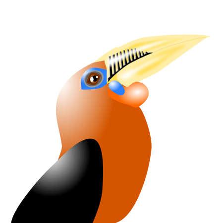 necked: Rufous hals neushoornvogel