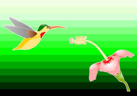 녹색 배경 허밍 조류와 꽃