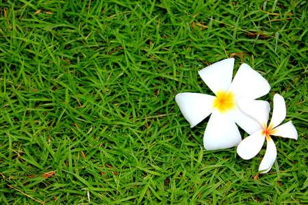 프랜지 파티 꽃 풀밭에 떨어지다 스톡 콘텐츠 - 21585928