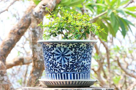 A little tree in ceramic flower pot