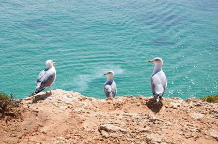 edge of cliff: Seagulls on a cliff edge