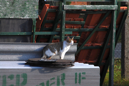 domesticated: Domestic cat domesticated warehouse building materials observe events nearby.