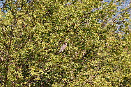 absorb: Heron standing on a tree and absorb the summer sun