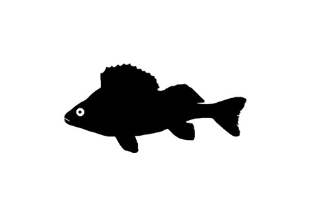 perch: The silhouette of fish from Bandar which is of the genus perch.