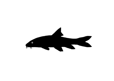 clear waters: Silhouette freshwater fish Barbel who lives in a fast and clear waters. Illustration