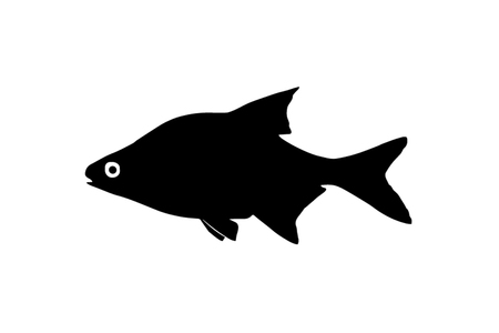 freshwater: Silhouette freshwater fish bream which lives in lakes and slow rivers.
