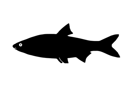 Silhouette freshwater fish Sneep that lives in lakes and fast and clear rivers. Çizim