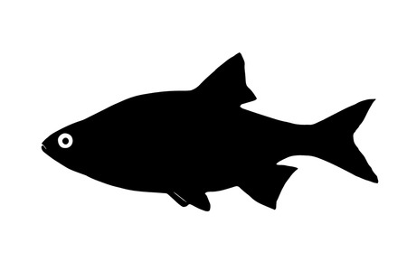 ide: Silhouette freshwater fish Ide orfe who lives in a fast and clear waters. Illustration
