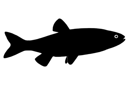 chub: Silhouette freshwater fish chub who lives in lakes fast and clean rivers.