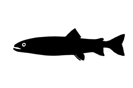 Silhouette freshwater fish  huchen who lives in  fast and clean rivers. Çizim