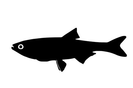 The silhouette of fish predators Bucov freshwater fish that lives in clear lakes and rivers. Çizim
