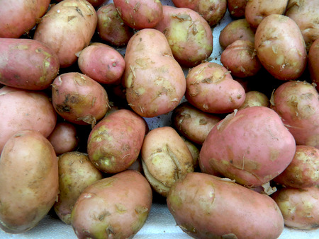 put forward: Young and fresh potatoes put forward to the market for sale.