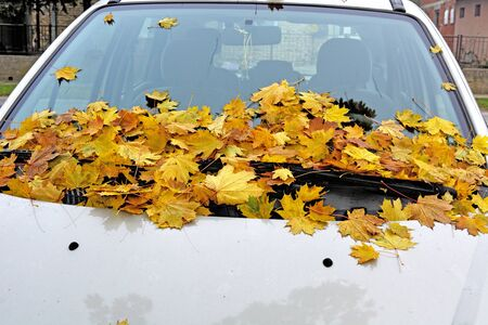 Autumn leaves of a tree fell on a car windshield. Stock Photo
