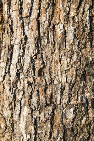 stock photography: The bark on an old tree sunny and carved with age.