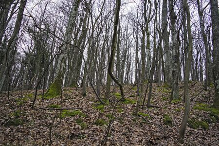 stock photography: Deciduous forest in winter waiting for spring.