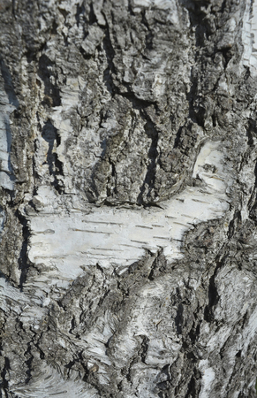 stock photography: The bark on old wood, carved with age.