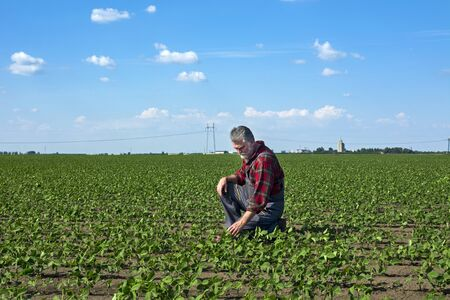 A middle-aged agronomist in a field of young soy that is nicely nickel controls the growth of plants. Stockfoto