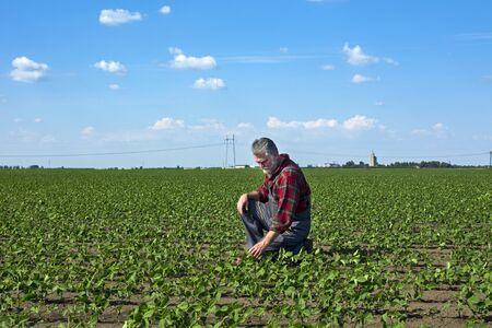 Un agronomo di mezza età in un campo di giovane soia che è piacevolmente nichel controlla la crescita delle piante. Archivio Fotografico