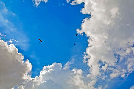 A lone paraglider athlete flying high in the clouds with birds.