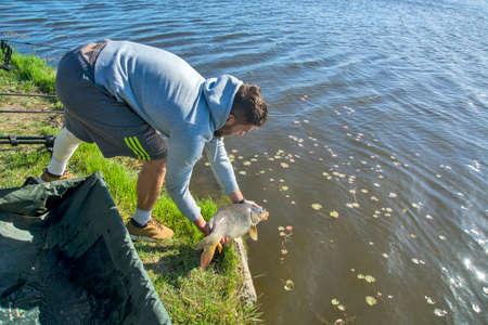 The sport fisherman releases the caught carp back into the water. He previously measured it and took a picture with the fish.