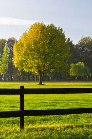 Green grass and colorful tree surrounded by a wooden fence