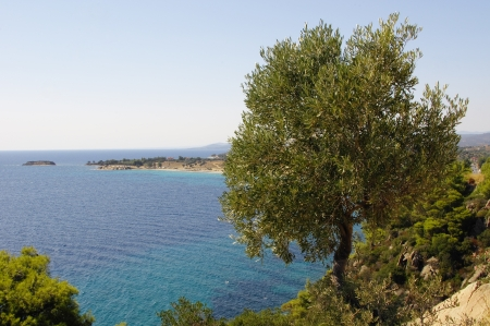 Lovely viewpoint  by the olive tree watching at the Aegean sea in Greece