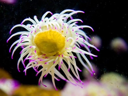 Sea anemones are a group of water-dwelling, predatory animals which are named after the anemone, a terrestrial flower