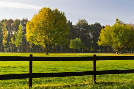 Green grass and colorful trees surrounded by a wooden fence on a sunny morning photo