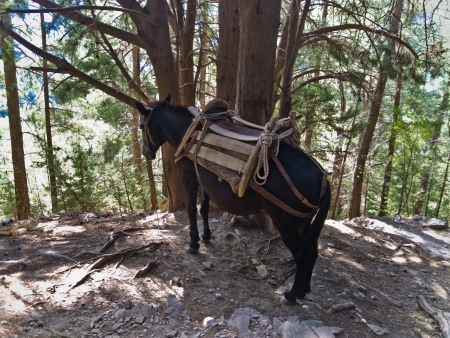 Donkey is the only way to transport injured people thru Samaria gorge Stock Photo - 18871035