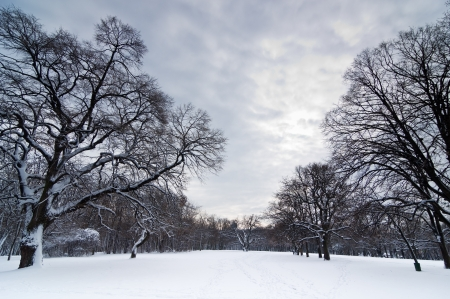clearing the path: Snow path thru forest clearing under heavy winter clouds Stock Photo