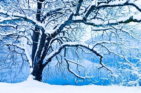 Árbol peludo cubierto de nieve, el lago Bled, Eslovenia Foto de archivo - 19046241